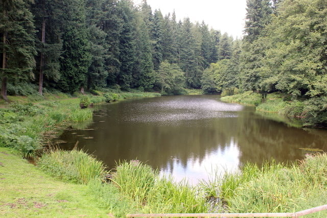 Download 'On Soudley Ponds'
